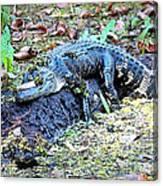 Hard Day In The Swamp - Digital Art Canvas Print
