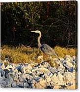 Hard Rock Heron Canvas Print
