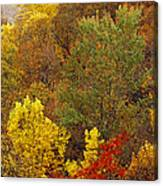 Hardwood Forest With Maple And Oak Canvas Print