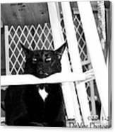Harry One Twisted Cat Canvas Print