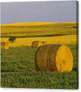 Harvest In Montana Canvas Print