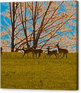 Has Anyone Seen Rudolph Canvas Print