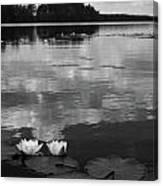Haukkajarvi Water Lilies In Bw Canvas Print