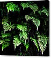 Hawaiian Fern Canvas Print