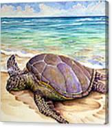 Hawaiian Green Turtle Canvas Print