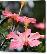 Hawaiian Pink Hibiscus Canvas Print