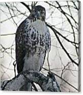Hawk 9 Canvas Print