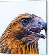 Hawk Head Canvas Print