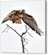Hawk Taking Flight Canvas Print