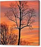 Hawk Watching The Sunrise Canvas Print