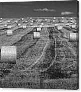 Hay Bales On A Farm In Alberta Canvas Print