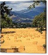 Hay Field With Mountain Background Canvas Print