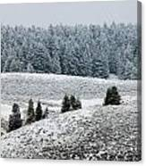 Hayden Valley Storm Canvas Print