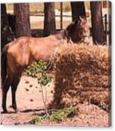 Hay's For Horses Canvas Print