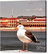 hd 384 hdr - Lone Seagull Canvas Print