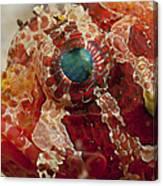 Head Detail Of A Red Dwarf Lionfish Canvas Print