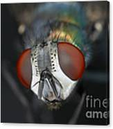 Head Of A Green Blow Fly Canvas Print
