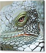 Head Of A Green Iguana Canvas Print