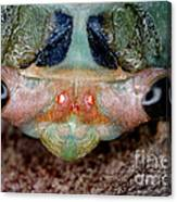 Head Of Cicada Canvas Print