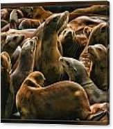 Heads Above The Rest Canvas Print