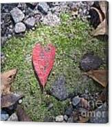 Heart Leaf Canvas Print