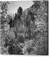 Heart Of The Aspen Forest Canvas Print