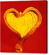 Heart-shaped Nutshell Canvas Print