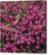 Heather 'nathalie' Flowers Canvas Print