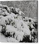Heavy With Snow Canvas Print