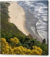 Heceta Beach View Canvas Print