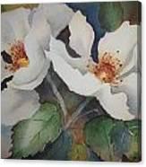 Hedge Roses Canvas Print