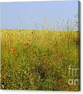 Hedgerow Flowers Canvas Print
