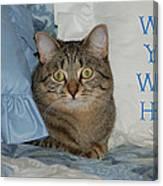 Heidi Cat Miss You Canvas Print