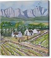 Helderberg Wine Estate Canvas Print