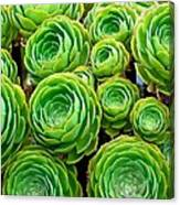 Hens And Chicks Canvas Print