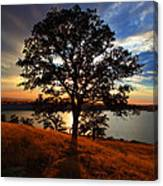Hensley Tree Canvas Print