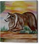 Herding Collie Canvas Print