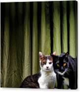 Here Kitty Kitty Canvas Print