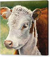 Herford Calf  Canvas Print