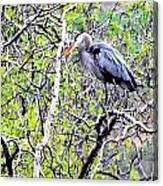 Heron Alone Canvas Print