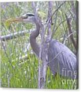 Heron In The Shade  Canvas Print