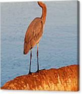Heron On Palm Canvas Print