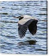 Heron Over Water Canvas Print