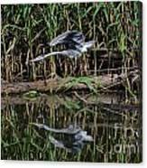 Heron Reflected In The Water Canvas Print