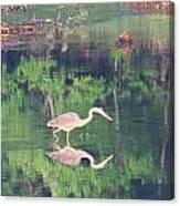 Heron Reflections1 Canvas Print