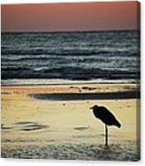 Heron Waiting For The Sunrise Canvas Print