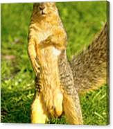 Hey Buddy Have You Seen My Nuts Canvas Print