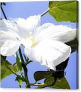 Hibiscus -1 Canvas Print