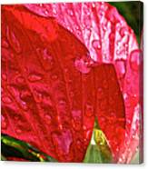 Hibiscus Blossom In Red Canvas Print