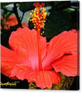 Hibiscus Bowl Canvas Print